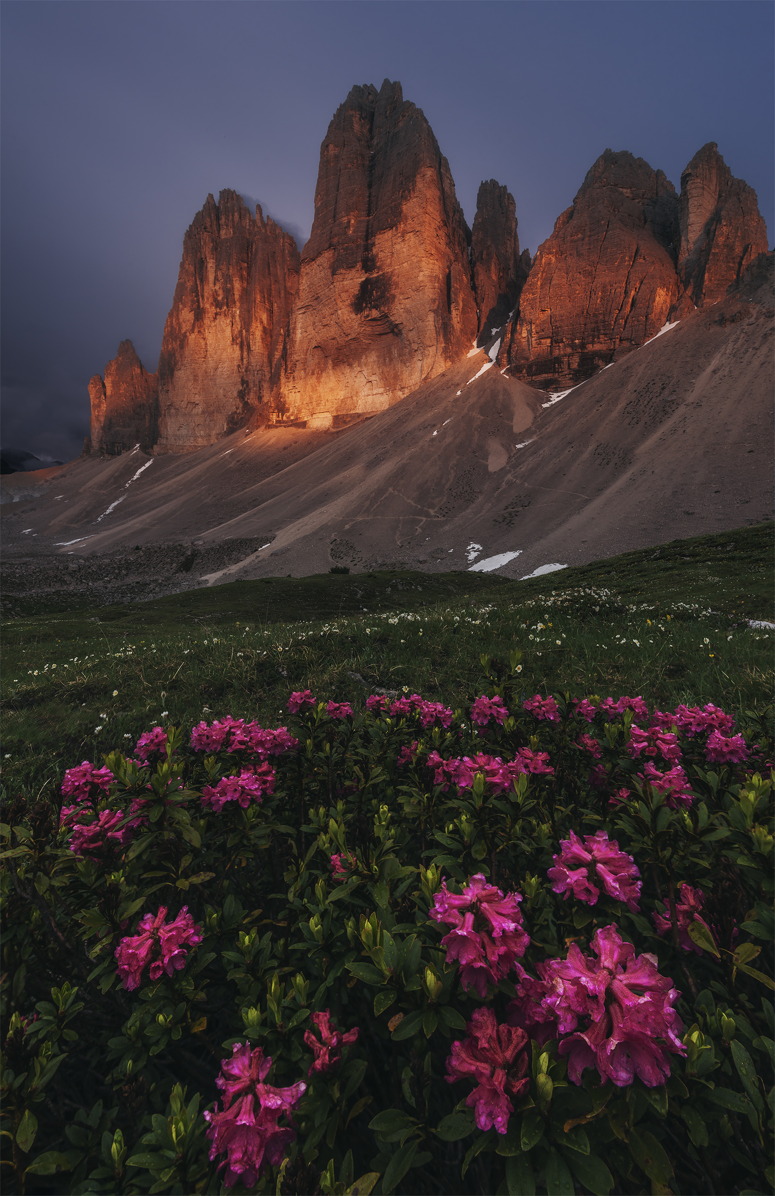 dolomites wildflowers photography tour