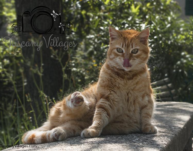 cat and castelvecchio 4