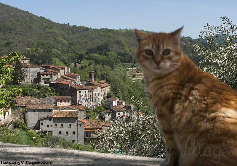 Posing Cat in Castelvecchio, Pescia