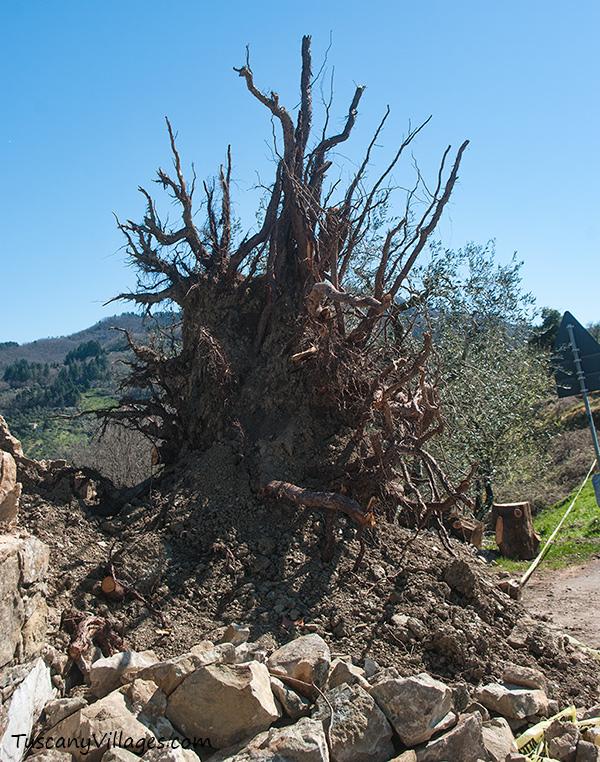 Cemetery fallen tree Aramo