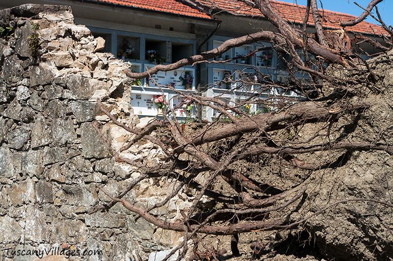 Cemetery Aramo, Pescia, fallen tree, gravestones