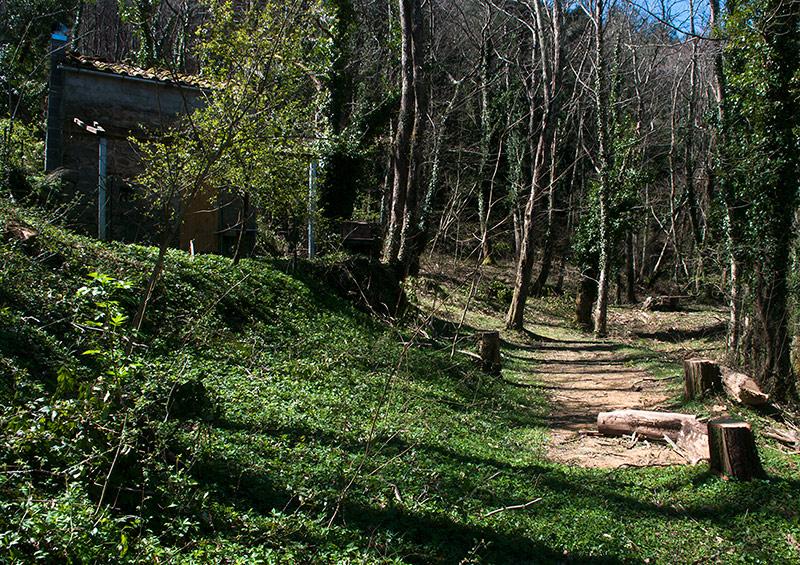 San Quirico, woodland