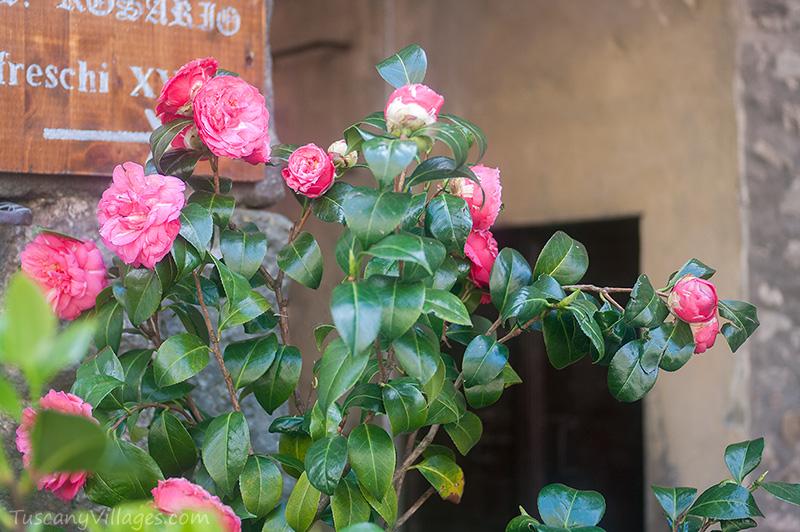 roses-Castelvecchio