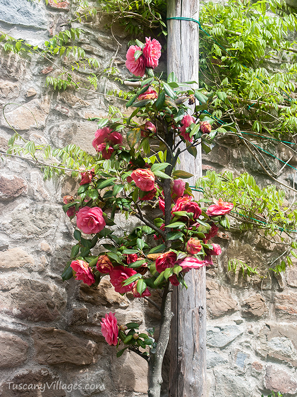 roses-up-wooden-pole