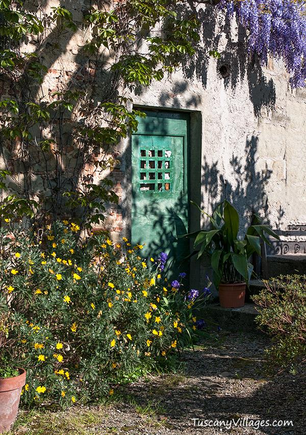 collodi-wisteria2