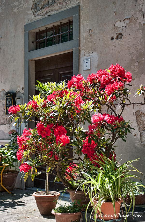 large pot of flowers, Vellano