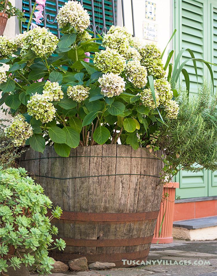 green-flowers-and-door fibbialla
