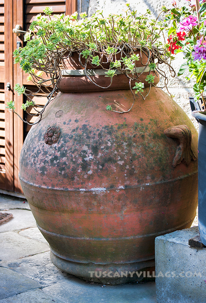 Terracotta Pot with flowers