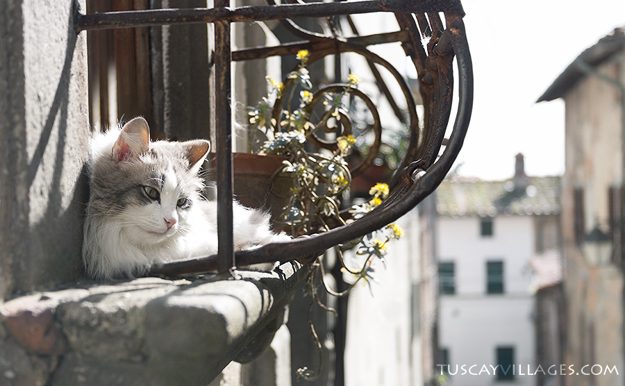 cat in a window, Tuscany, Buggiano