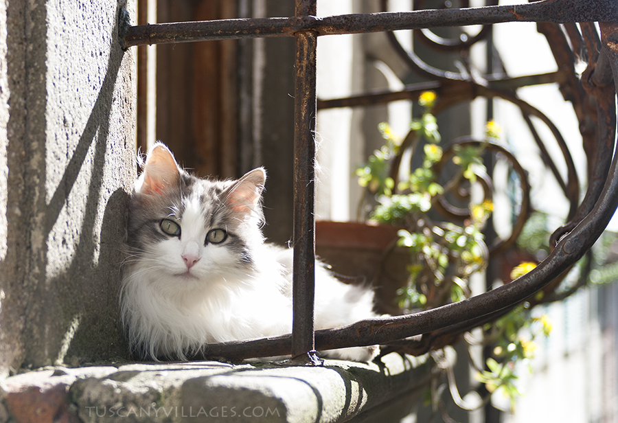 Cat in a window, tuscany