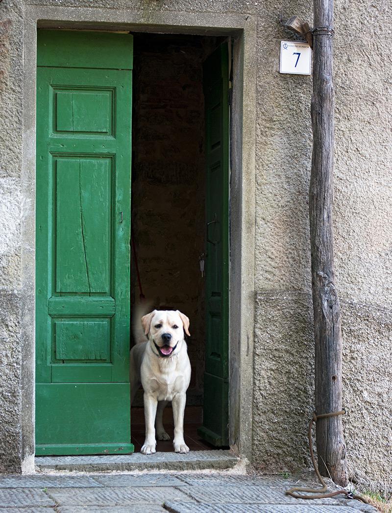 doggie-green-door
