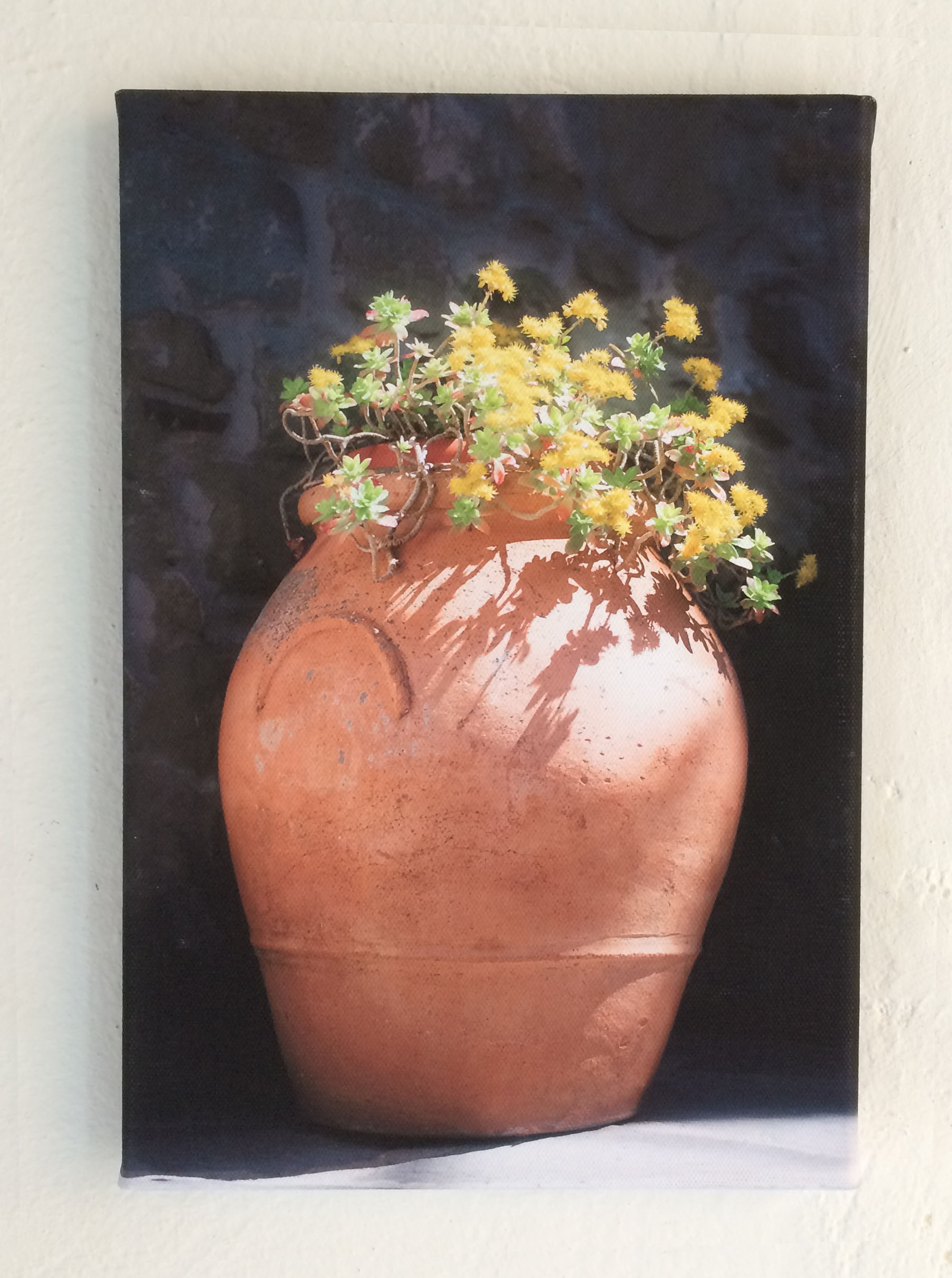 terracotta vase yellow flowers canvas