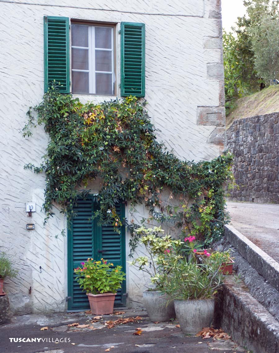 Castelvecchio climbing plant