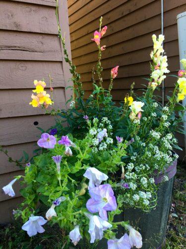 Tuscarora Lodge flowers