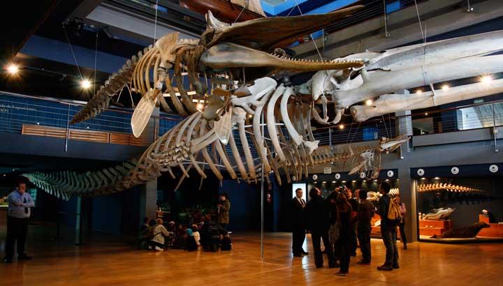 Interior del Museo Marítimo del Cantábrico (MMC) en el que se encuentran los esqueletos de un rorcual y de un cachalote encontrados en el siglo XIX