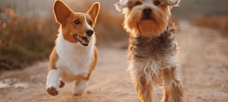 cuidados diarios mascota