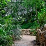 Plantas privacidad jardín