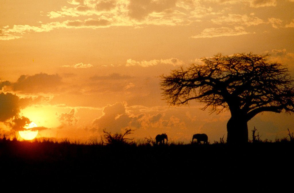Kilimanjaro Safari Tarangire