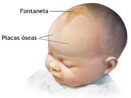Fontanela del bebé