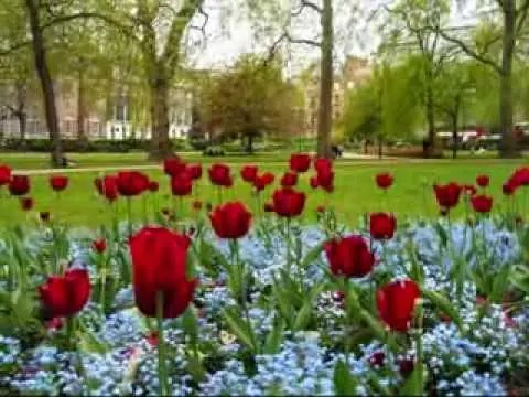En este momento estás viendo Video: Jardin De Rosas – Annette Moreno