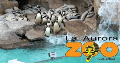 Pinguinos en el Zoo la aurora