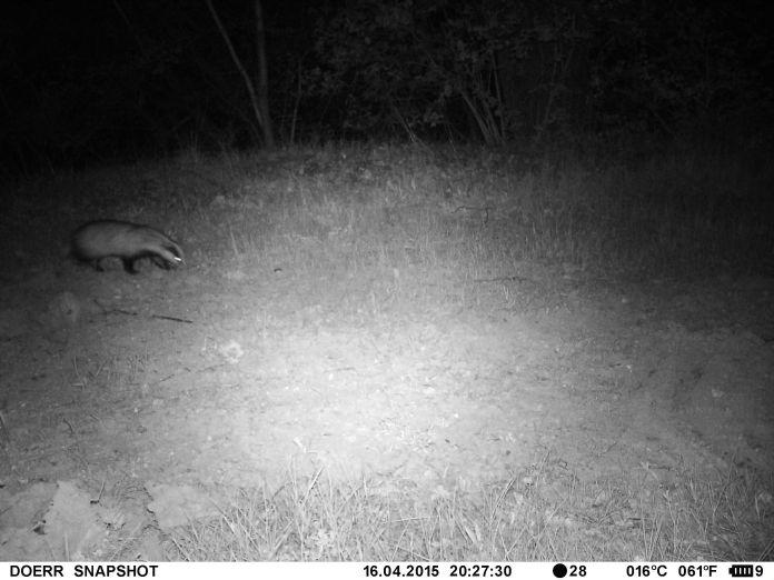 Badger 2 - 16 Apr 2015