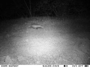 Badger 1 - 16 Apr 2015