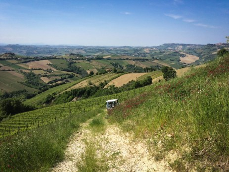 Down from the house along the top of the vineyard, making my way to the olive grove