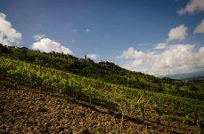 Ripatransone from the Vineyard