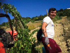 Antonio's first vendemmia!