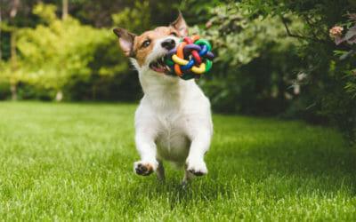 Giochi Per Cani Quali Sono I Migliori Come Realizzarli E