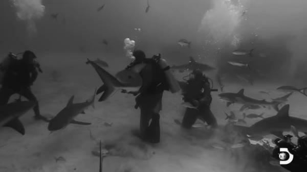 tyson squalo