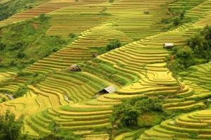 VietnamT9
