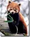 Firefox_3.5_bug_javascript