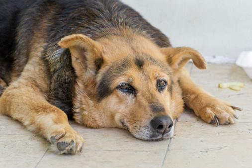 Mille famiglie mille cani anziani iniziativa aidaa