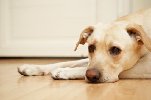 1 cane 3 non riceve giuste cure