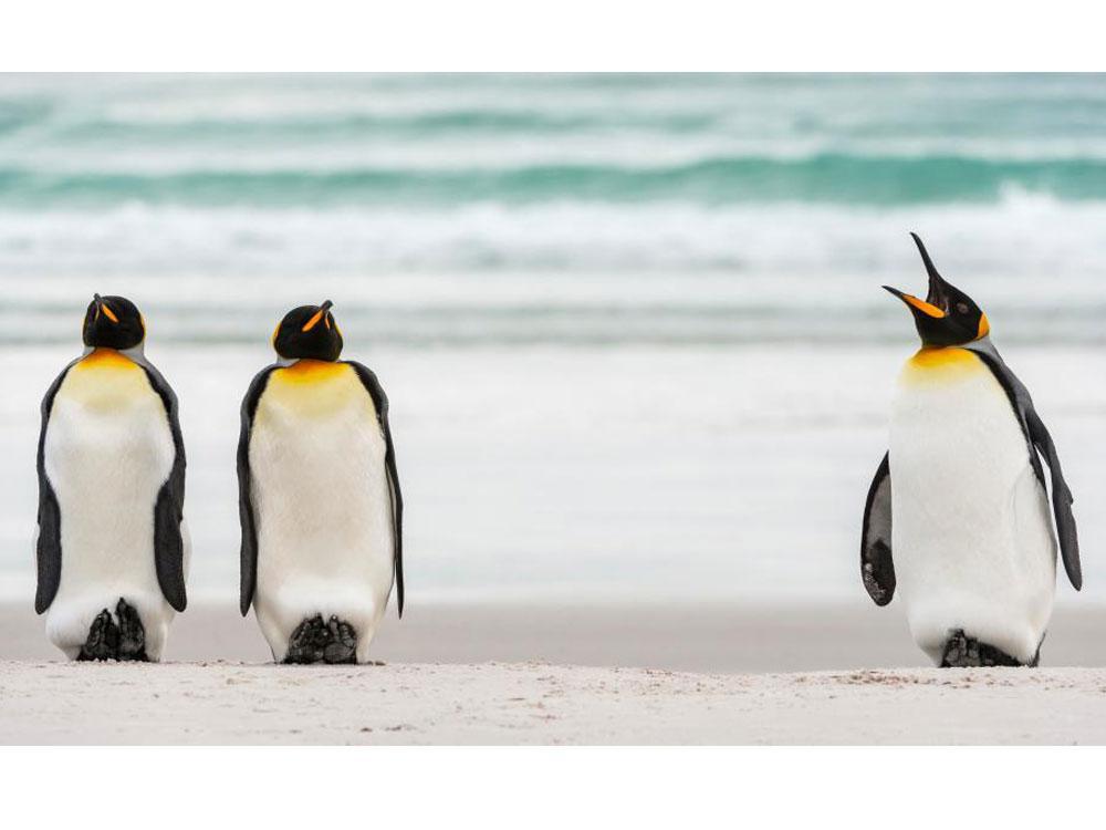 un pingüino muy mandón