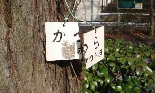 適当な日本語サポートでも問題ない