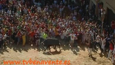 Photo of BASES DEL CONCURSO DEL CARTEL DEL TORO ENMAROMADO DE BENAVENTE 2014