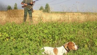 Photo of Inicio de la media veda de caza con un aumento de 17 a 20 días hábiles