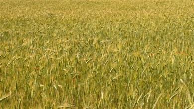 Photo of UCCL insta a la Consejería de Agricultura que retome el apoyo a los seguros agrarios