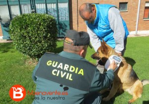 guardia perros