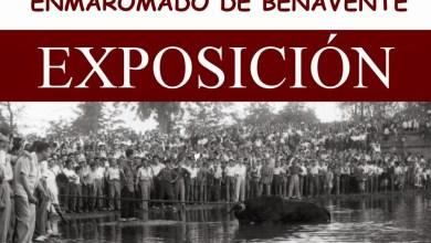 Photo of MEMORIA GRÁFICA DEL TORO ENMAROMADO DE BENAVENTE