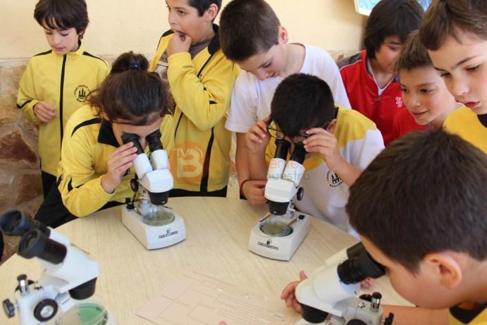 Alumnos de 5º Primaria observando macroinvertebrados