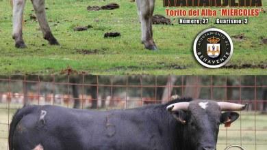 Photo of TORITOS DEL ALBA 2015 DE BENAVENTE