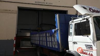 Photo of Bodegas Otero finaliza hoy la campaña de vendimia tras 15 días intensos de recolección