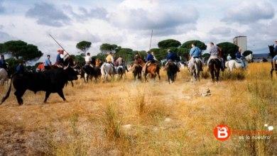 Photo of El Contencioso reafirma la prohibición del Torneo del Toro de la Vega
