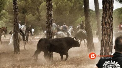 Photo of Pelado, primero Toro de la Peña celebrado hoy en Tordesillas