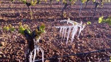 Photo of UCCL exige que Castilla y León sea declarada zona catastrófica por la extrema sequía