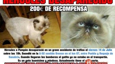 Photo of Recompensan con 200 euros si localizan al gato desparecido en la A-52